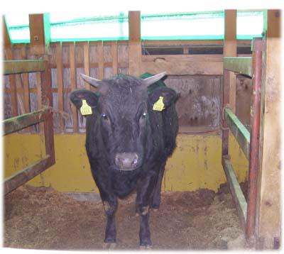 和牛の里、米沢へ
